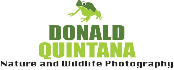 Donald Quintana Nature and Wildlife Photography